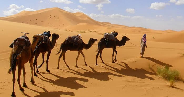 Puesta de sol camello en las dunas de Merzouga